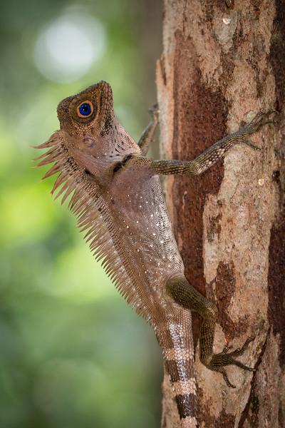 Borneo-2014-205.jpg