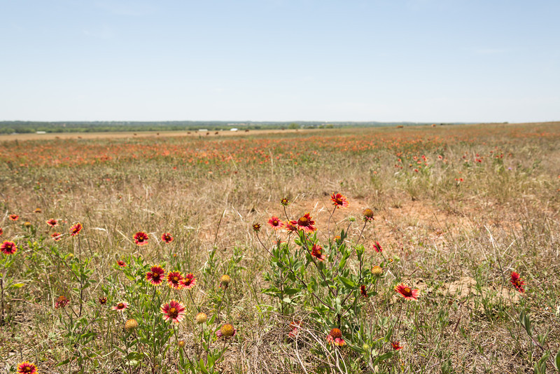 Texas-016-130507.jpg