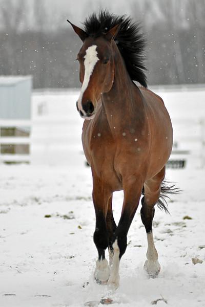 Snowy Dalanta 148 RETOUCHED.jpg