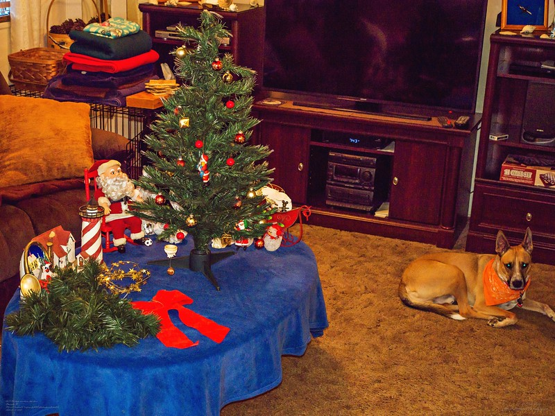 _1050024_  pl5 12x40 christmas take down,tip,paws,mal,mov.jpg