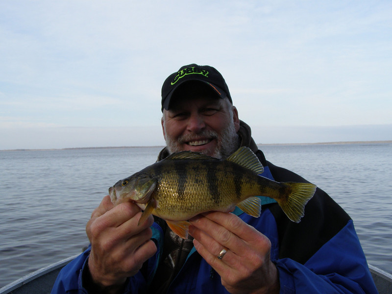 . Bob Lund of Forest Lake caught this 12-inch yellow perch on opening day near Grand Rapids. He was guided by his son Zach. (Photo courtesy Bob Lund)