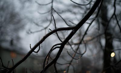 Neighborhood trees in winter