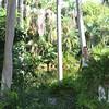 Bonnet House, Fort Lauderdale, FL-11
