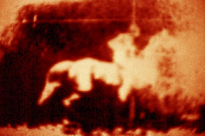 apocalyptic rider II