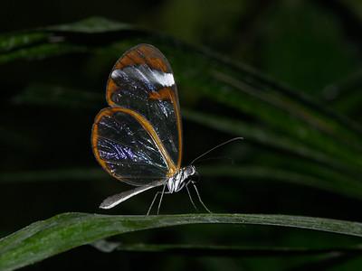 2004-10 Vlindertuin Kwadendamme