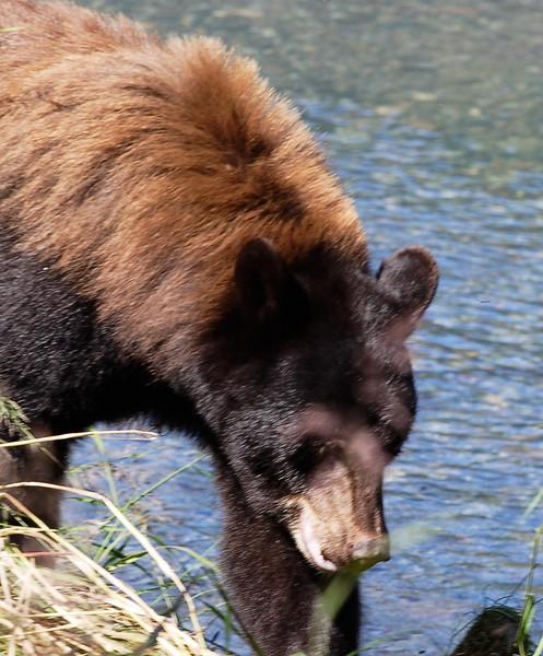 Alaska404.jpg