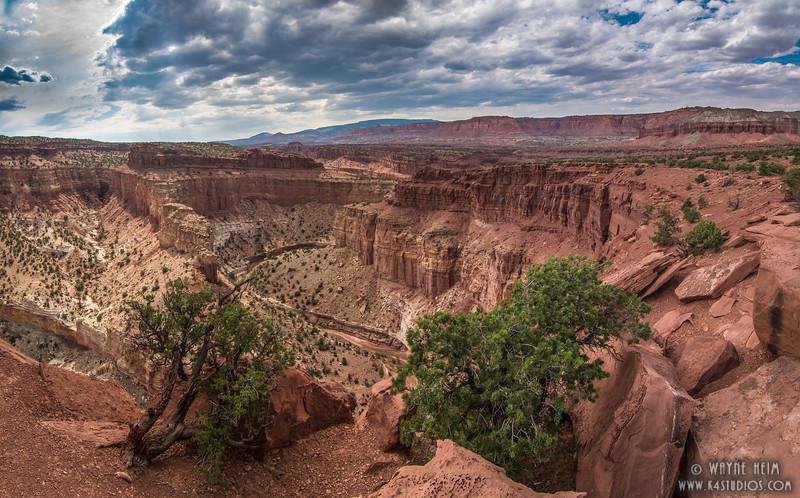 Canyon Trees  Photography by Wayne Heim