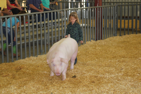 County Fair 2012 Swine Show