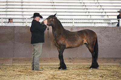 2017 MotherLode Show Gypsy Horses