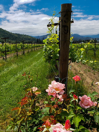 05-29-2018 Applegate Wine Tour with the Sterretts
