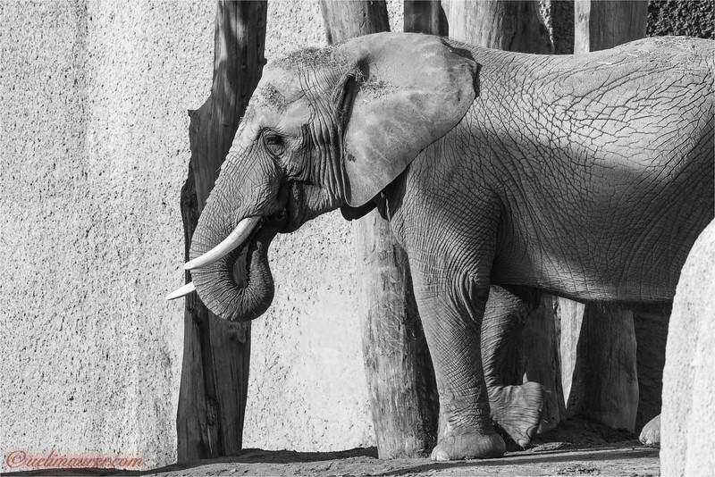 2017-11-16 Zoo Basel - 0U5A8469.jpg