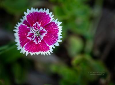 Joe's Floral Garden