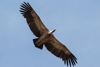 Extremadura 2006