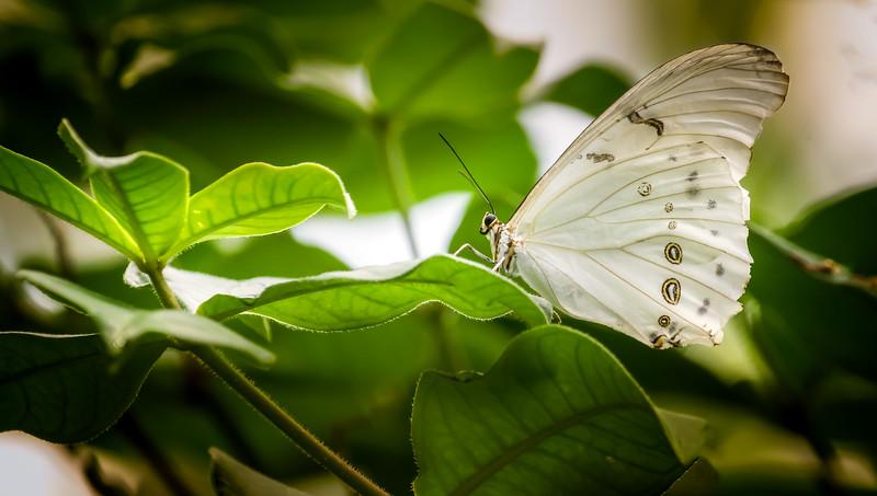 Butterfly-215.jpg