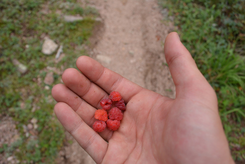We went downstream to about 8,000ft or 2.438m and from there hiked up Needle Creek. On our way we found testy raspberries.