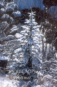 Snow_026