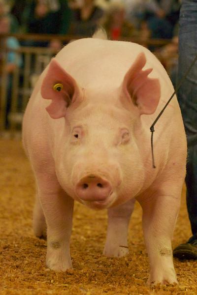KJLS Swine