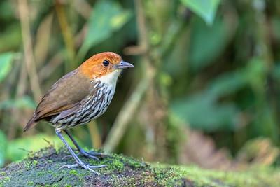 Birds (not including Hummingbirds)
