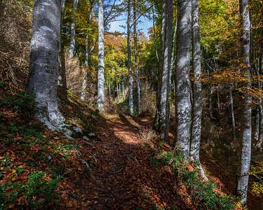 Bosque La Grevalosa