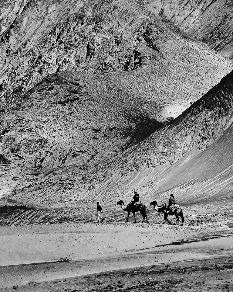 """Together Through the Sands of Time ... ""<br /> <br /> Camel Safari at Nubra sand dunes."