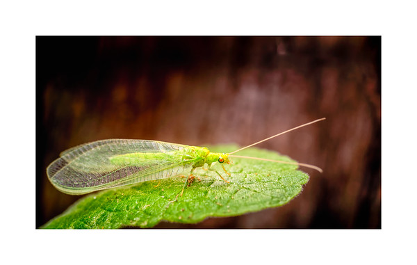 Wildlife:  Bugs & Other Insects