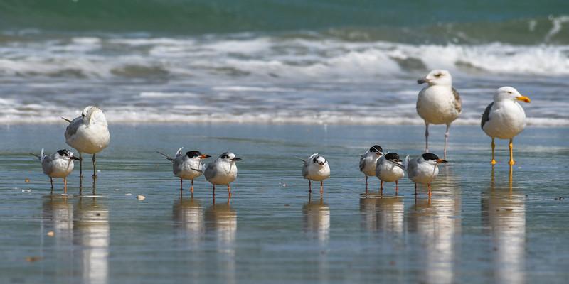 birds 9540 10x20.jpg