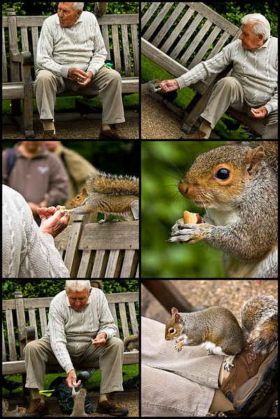the-squirrel-guy-in-kensington-gardens-mosaic_2570173677_o.jpg