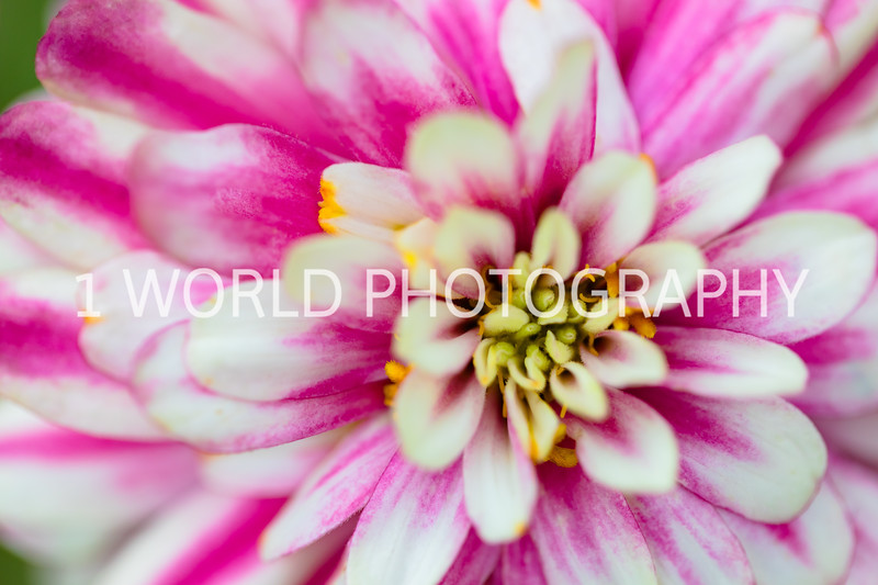 Spring Flowers 2018_Cantigny Flowers_Cantigny-90-13.jpg