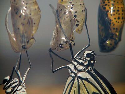Butterflies Garden - Zwin (Belgium)