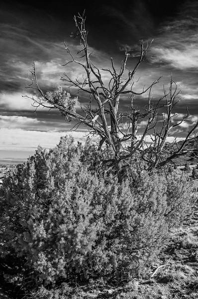 Bear Canyon Walk - June 2013