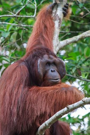 Wildlife of Borneo, 2013