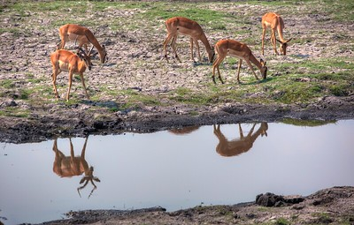 Chobe National Park ,  Zimbabwe