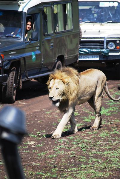 Ngorongoro (101).JPG