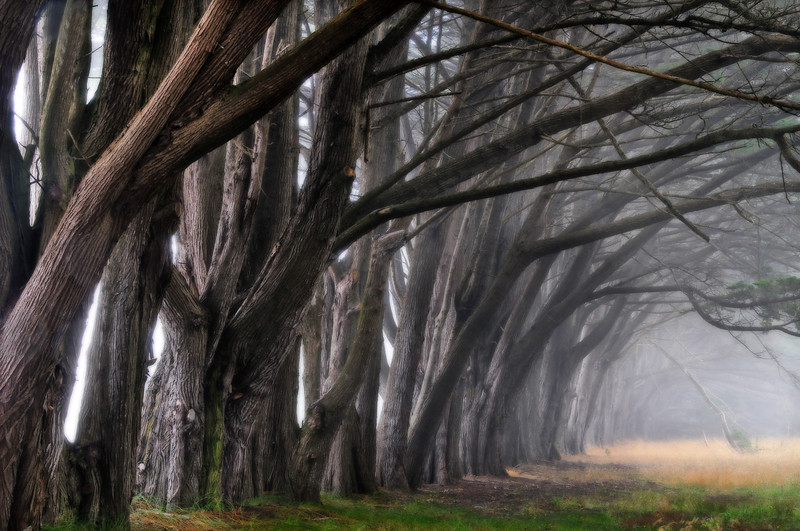 fog, trees, ethereal, eerie