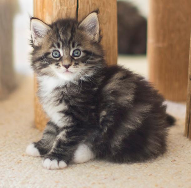 Kittens293.jpg