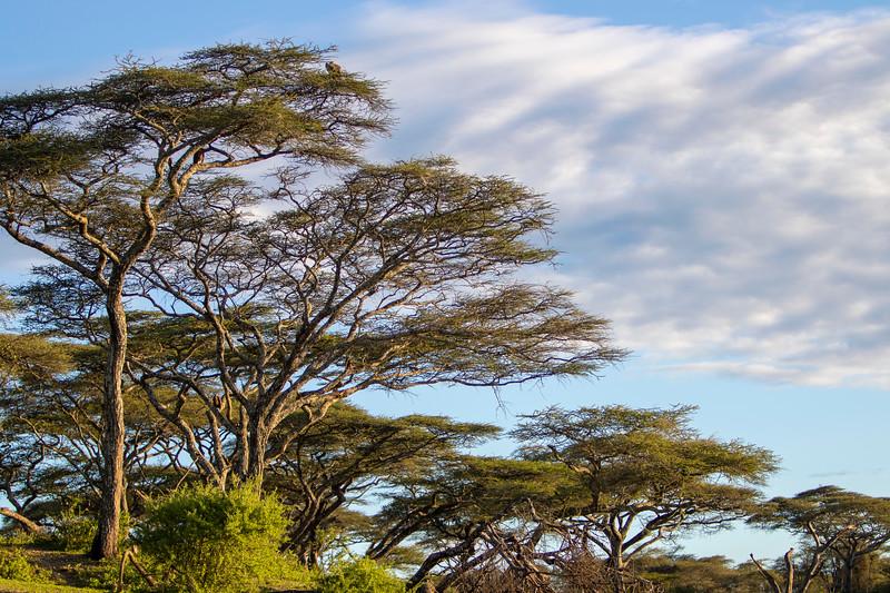 Africa 19 Jpegs_198.JPG