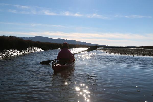 Kayaks & Seals