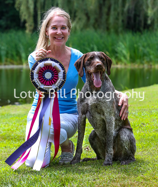 Rocco German Wirehaired Pointer DB