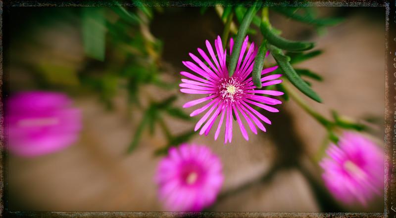 purple flowers 120514-2.jpg