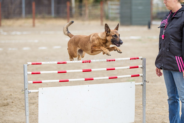 Protection Dog Sport
