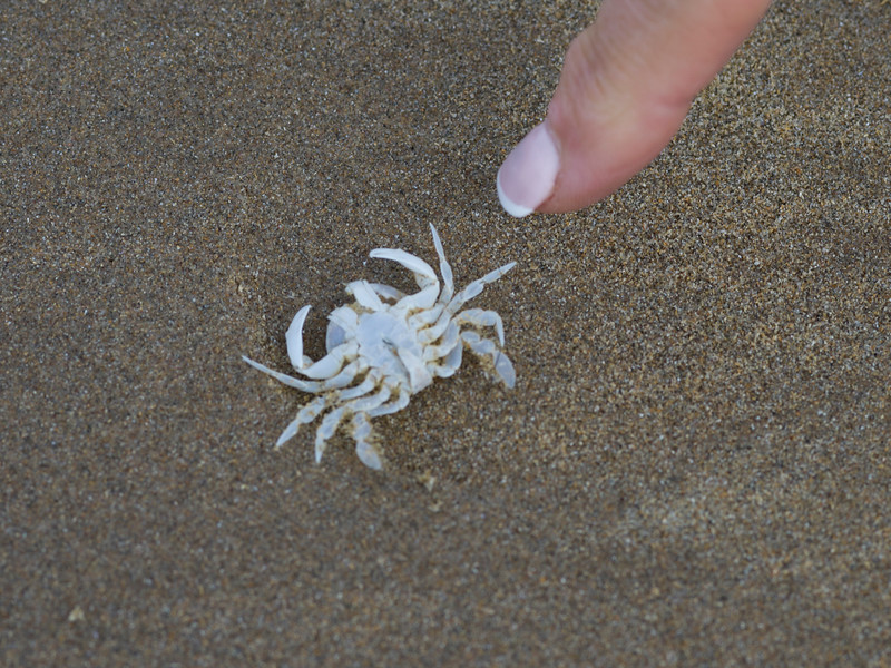Person's finger pointing at crab on sand, Downhill Beach, Northern Ireland, United Kingdom