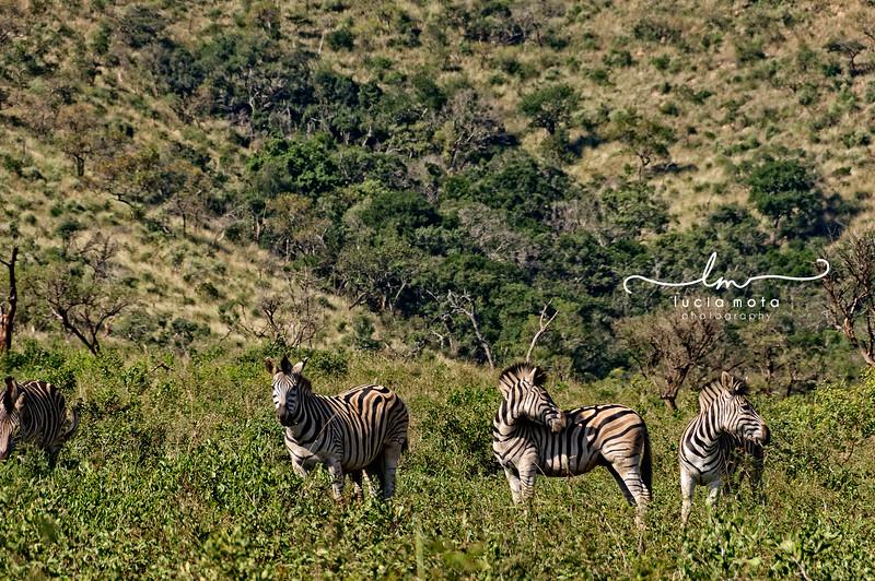 SOUTH AFRICA-76.jpg