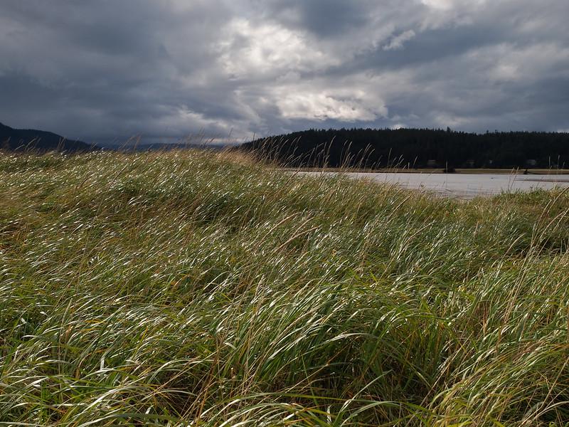 Grass_by_Mendenhall_River.jpg