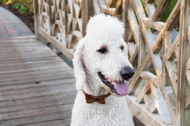 DogDays_Dogs_Gardens_2015_PIC_6510.jpg