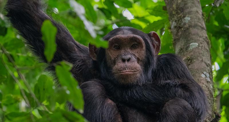 Uganda_T_Chimps-1646.jpg