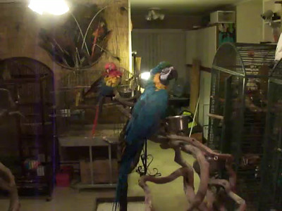 Video Gallery - Rescued Parrots