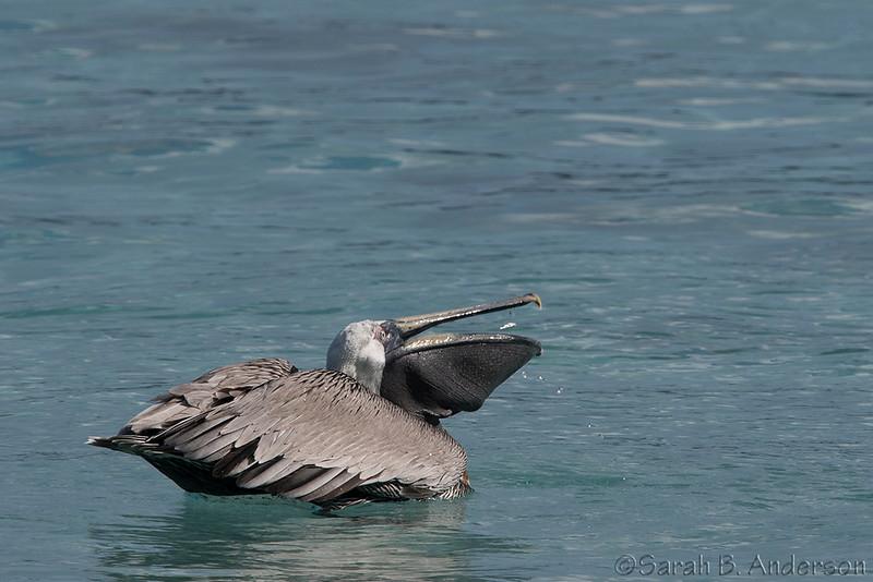 Pelican fish flip