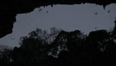 Bat cave , Madagascar 2011