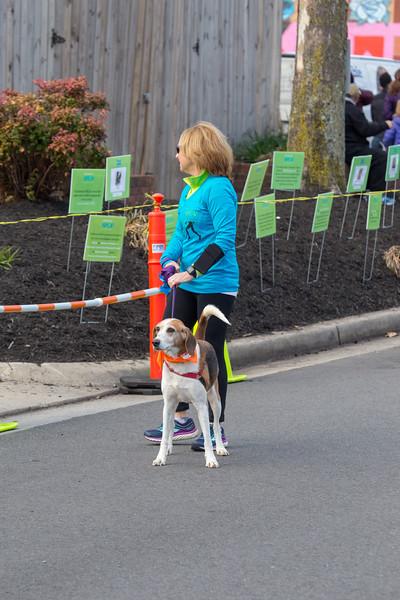 Richmond Spca Dog Jog 2018-633.jpg
