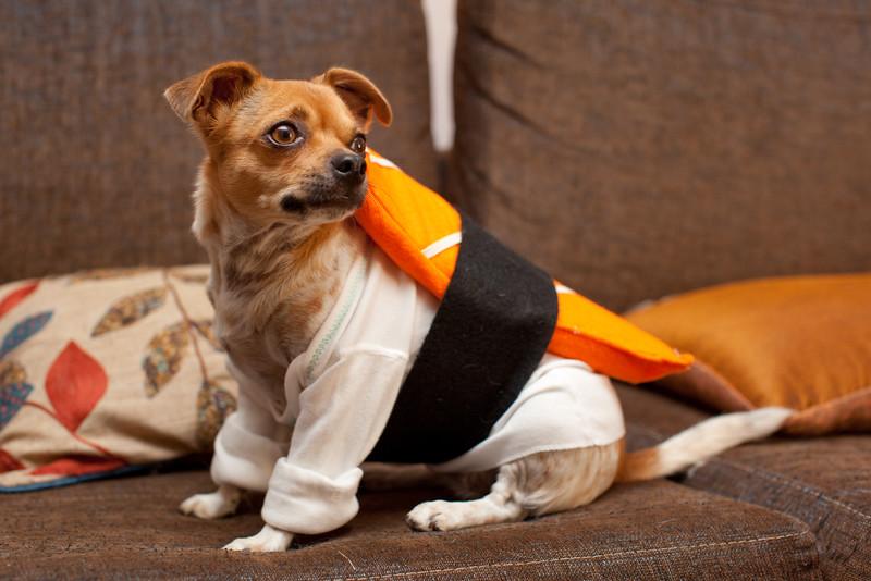 Dog-sushi-halloween-34.jpg